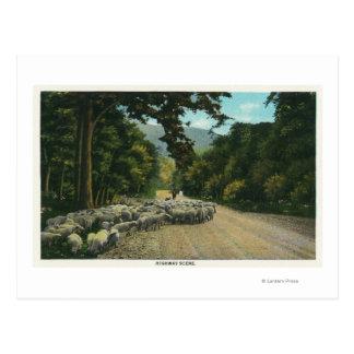 Carte Postale Un principal mouton de berger sur une route du