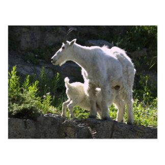 Carte Postale Une bonne d'enfants de chèvre de montagne soigne