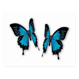 Carte Postale Une paire de papillons bleus tropicaux