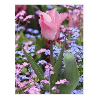 Carte Postale Une tulipe chez le Luxembourg fait du jardinage,