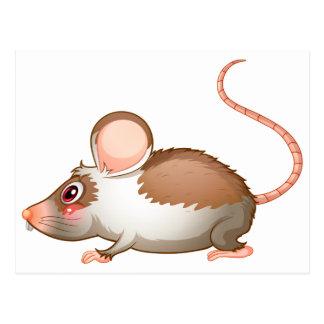 Carte Postale Une vue de côté d'un rat