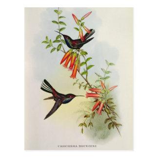 Carte Postale Urochroa Bougieri