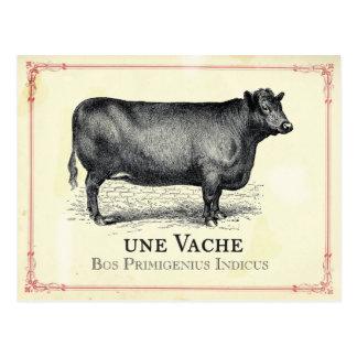 Carte Postale Vache à Vache