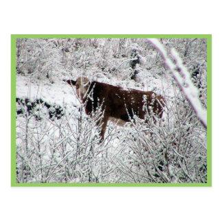 Carte Postale Vache dans les buissons