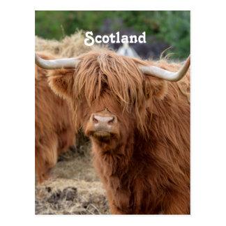 Carte Postale Vache des montagnes