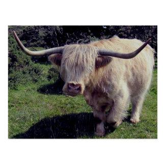 Carte Postale Vache des montagnes à Dartmoor sur le mouvement