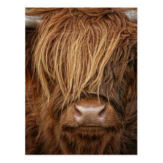 Carte Postale Vache des montagnes écossaise - Ecosse