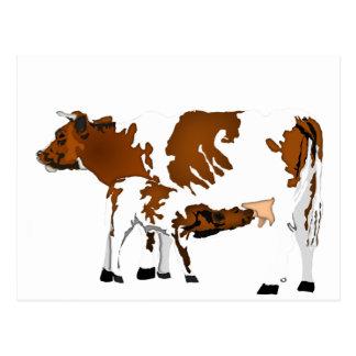 Carte Postale vache et veau