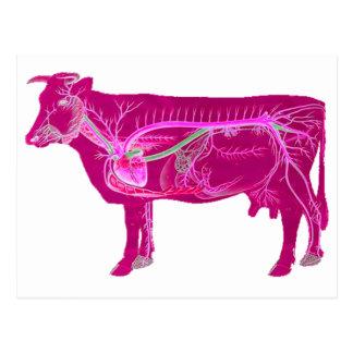 Carte Postale Vache mignonne anatomique