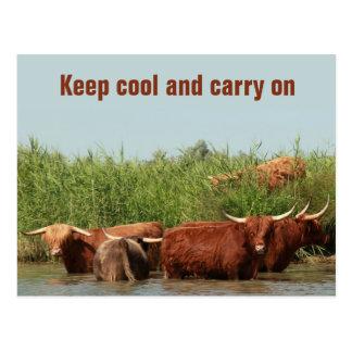 Carte Postale Vaches à Longhorn maintenant fraîches et