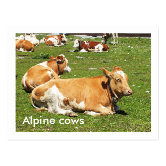 Carte Postale Vaches alpines