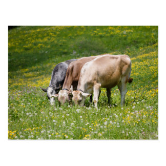 Carte Postale vaches dans le pré