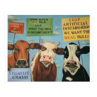 Carte Postale Vaches en grève