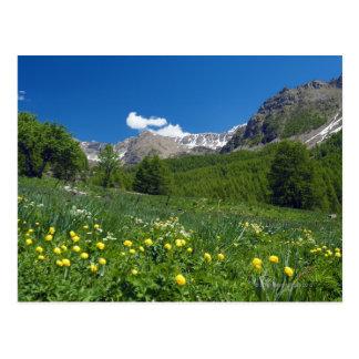 Carte Postale Vallée au printemps la Côte d'Azur d'Estenc
