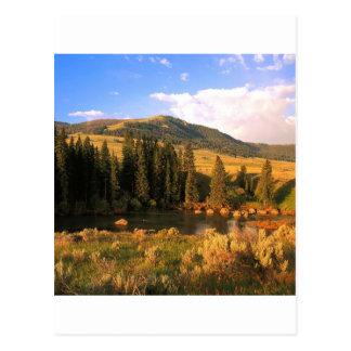 Carte Postale Vallée Yellowstone Wyoming de Lamar de scène