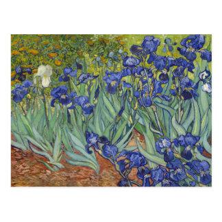 Carte Postale Van Gogh irise des beaux-arts vintages floraux