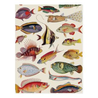Carte Postale Variétés de poissons