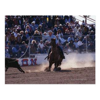 Carte Postale Veau Roping de cowboy au rodéo