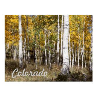 Carte Postale Verger du Colorado Aspen en automne