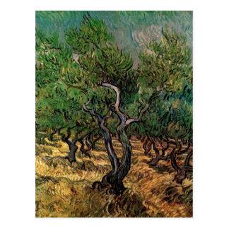 Carte Postale Verger olive de Van Gogh, beaux-arts vintages de