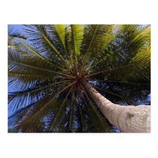 Carte Postale vers le haut de l'arbre de noix de coco