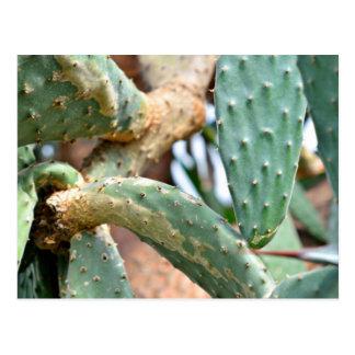Carte Postale Vert et cactus de Brown