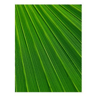 Carte Postale Vert tropical d'impression de modèle en feuille de