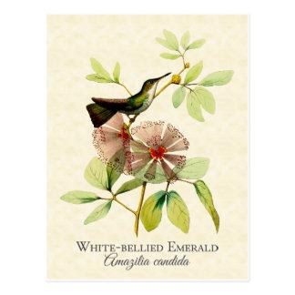 Carte postale verte d'art de colibri gonflée par