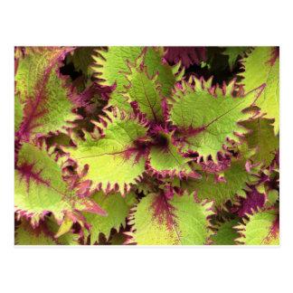 Carte postale verte de buisson