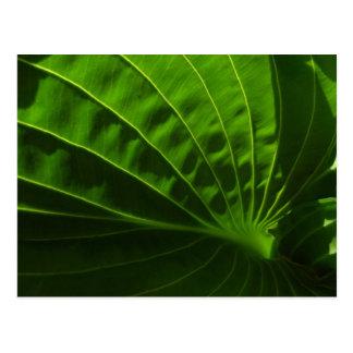 Carte postale verte de feuille de Hosta de ressort