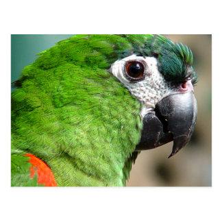 Carte postale verte de perroquet