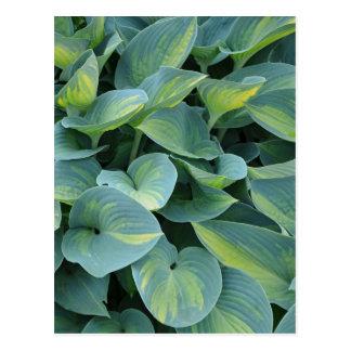 Carte postale verte d'impression de plante de