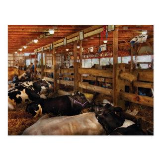 Carte Postale Vétérinaire - vache - vérification des dames