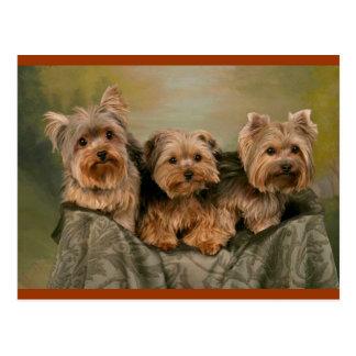 Carte postale vide de chiots de Yorkshire Terrier