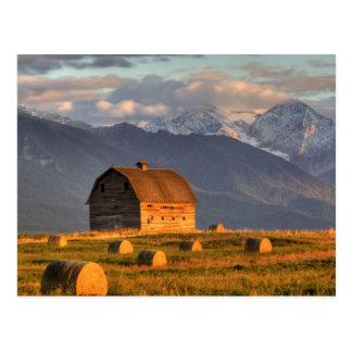 Carte Postale Vieille grange encadrée par des balles de foin et