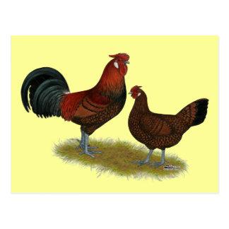 Carte Postale Vieille volaille anglaise de faisan