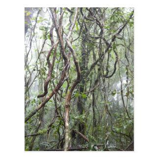 Carte Postale vigne et branches tordues dans la forêt tropicale
