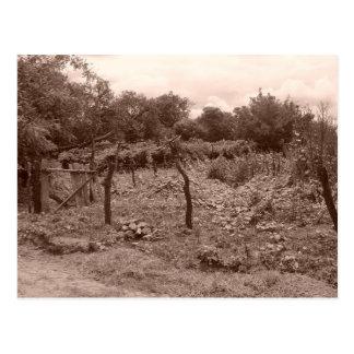 Carte Postale Vignoble abandonné 2