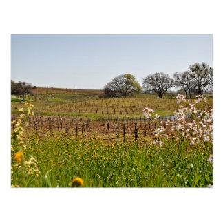 Carte Postale Vignoble de raisin au printemps
