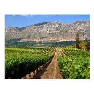 Carte Postale Vignobles de domaine de vin de Groot Constantia