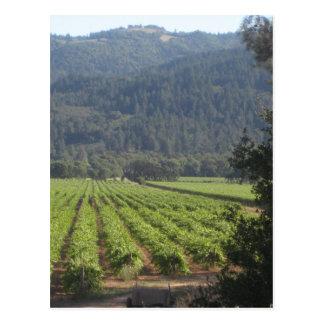 Carte Postale Vignobles de Napa Valley I