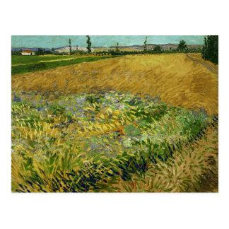 Carte Postale Vincent van Gogh - Wheatfield