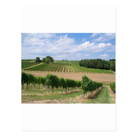 Carte Postale Vineyard - Vignoble (Bordeaux - France) 04