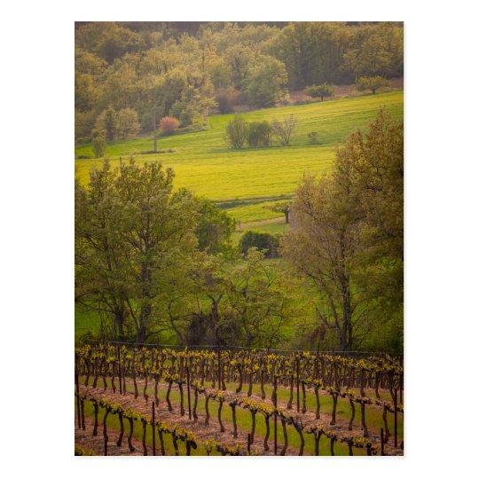 Carte Postale vineyards in France