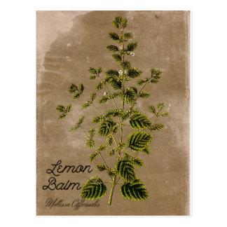 Carte postale vintage de baume de citron de style