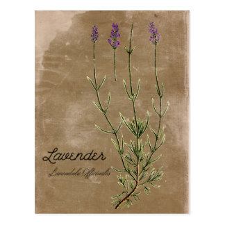 Carte postale vintage de fleur de lavande de style