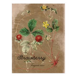 Carte postale vintage de fraisier commun de style