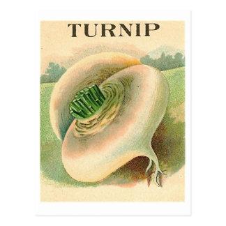 carte postale vintage de paquet de graine de navet