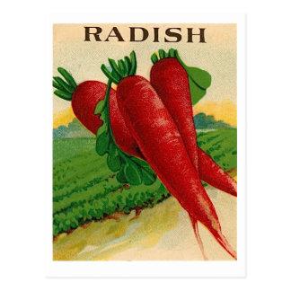 carte postale vintage de paquet de graine de radis