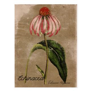 Carte postale vintage d'echinacée de style